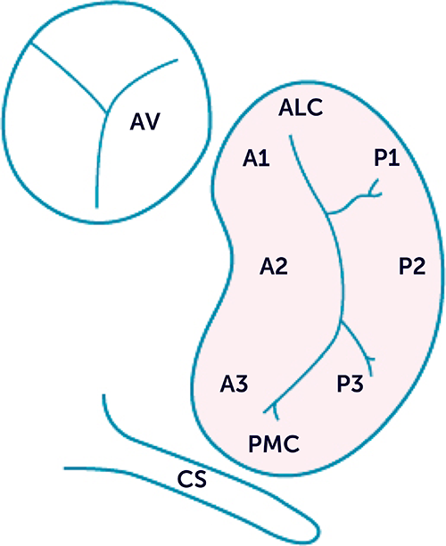 12.2 Anatomy and function of the mitral valve | 123sonography