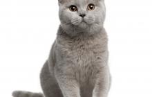 Cat123sonography.jpg