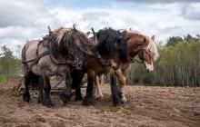 shutterstock_295767206_Horses%20Harness.jpg
